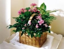 Blooming Basket in Pinks